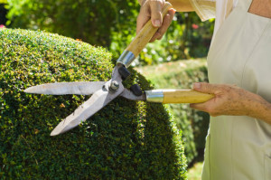 a woman trimming hedges with shears